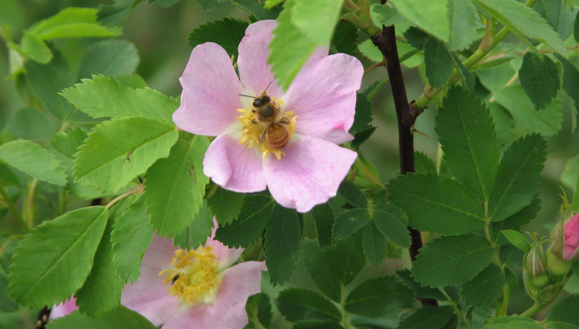 HoneyComb.ca